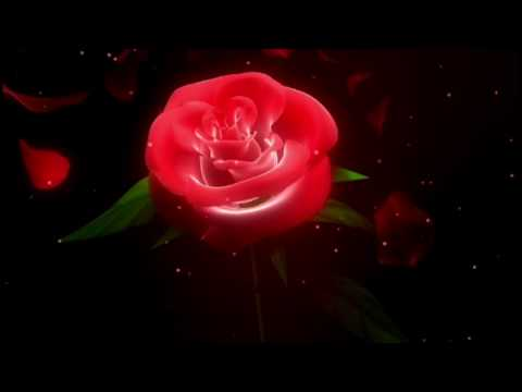 Free HD download Wedding background, Free motion graphics, wedding graphics animation FLOWER 015 thumbnail