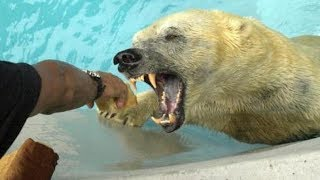 Top 9 Deadliest Animals of the Arctic