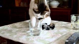 Кот лапкой пьет воду