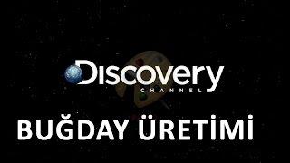 Discovery Channel Nasıl Yapılır Belgeseli (Buğday) Türkçe Dublaj