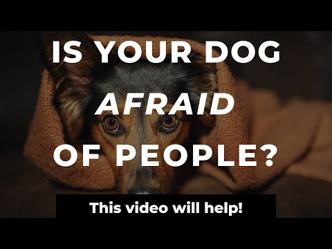 How To Stop A Dog's Fear Of Strangers| Training A Fearful Dog