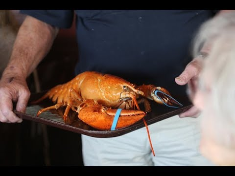 live red lobster delivered to claudio 39 s in greenport youtube. Black Bedroom Furniture Sets. Home Design Ideas