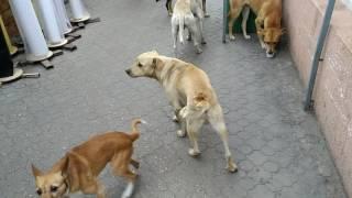 Бендеры лают бродячие собаки
