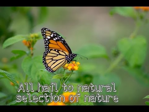 NATURE UNVEILED || An experiment with wonderful creations of nature