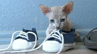 Sphynx Cats Are Always Naked, Love Shoes