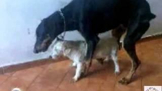 Виртуальный секс большой собаки