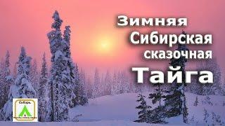 Зимняя Сибирская сказочная тайга/  Fabulous winter Siberian taiga