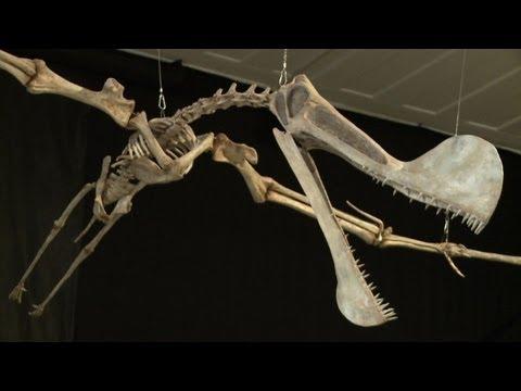Le plus grand fossile pt rosaure jamais trouv au br sil - Dinosaur volant ...