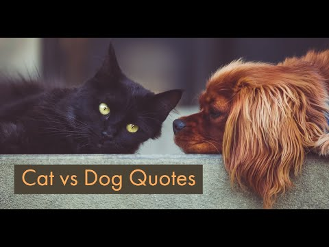 cat-vs-dog-quotes
