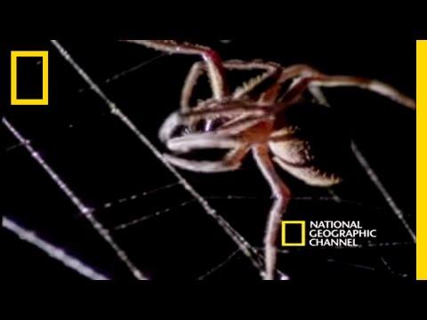 Big Rig - Spider VS. Bat. Who You Got?