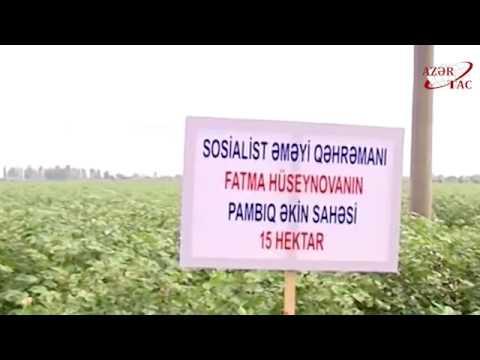 President Ilham Aliyev viewed cotton plantation in Sabirabad