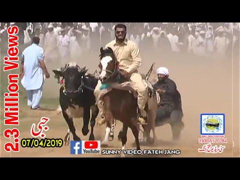 Bul Race In Pakistan Sunny Video Fateh Jang 07 04 2019...