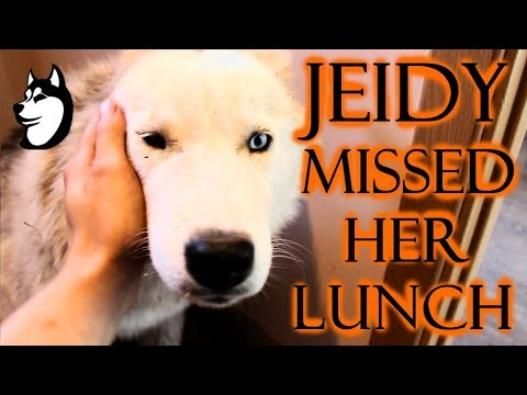 For The First Time Jeidy Did Not Eat Her Lunch! (2018)