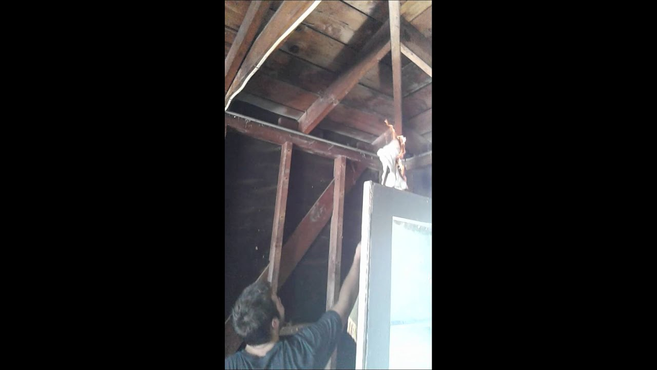 How To Get Rid Of Spider Webs Fast And Easy