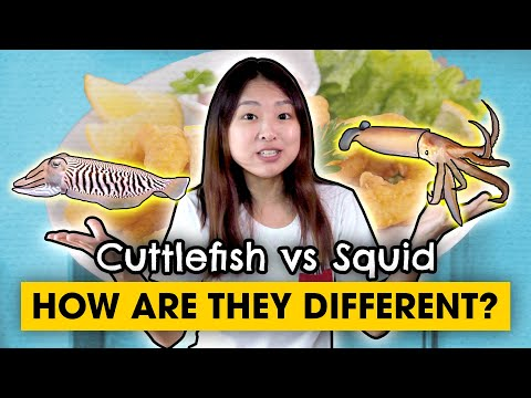 Sotong, Squid Vs Cuttlefish, You Won't Mix Them Up After Today
