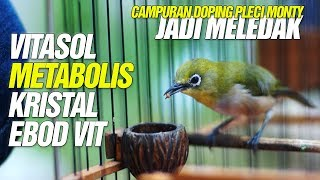 MJP CUP 4 TERBUKTI ️DOPING Vitasol Metabolis Kristal EBOD VIT Bikin Pleci Montanus MELEDAK