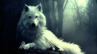 💜 Voimaeläinmeditaatio - Valkea susi