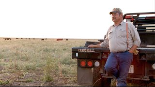 Cattle Money Ball - 2 Bar Angus, Multiview