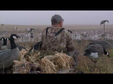 Duck Hunting Mallards Over Field Decoys (North Dakota)