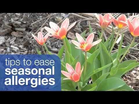 Tips to ease your seasonal allergies