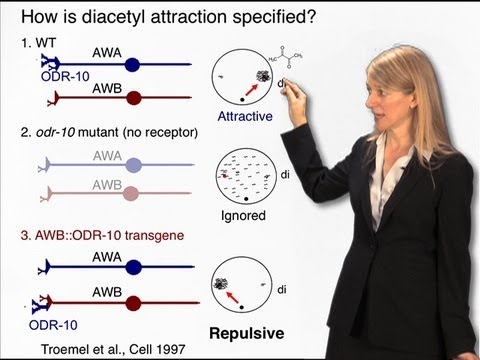 Cori Bargmann (Rockefeller) Part 1 : Genes, the brain and behavior