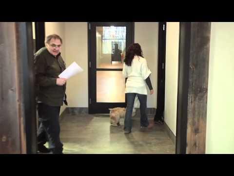 The Green Leaf Pet Resort & Hotel Video - Millstone, NJ
