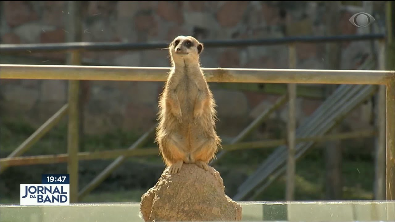 Notícias - Live animal! Zoo de SP mostra rotina dos bichos na quarentena - online