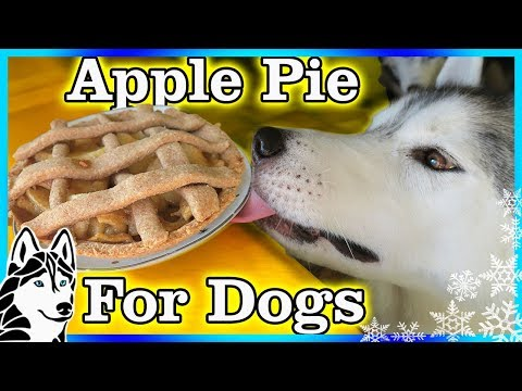 DIY APPLE PIE FOR DOGS | DIY Dog Treats | Snow Dogs Snacks 84