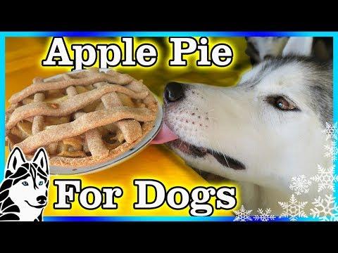 DIY APPLE PIE FOR DOGS | DIY Dog Treats | Snow Dogs Snacks 84