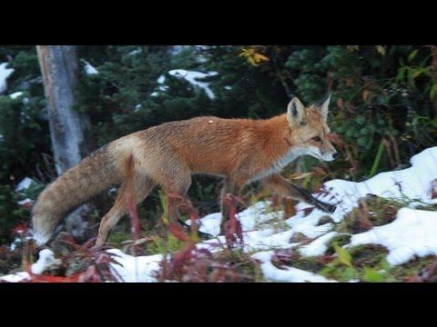 Animals Win, Hunter Fail Compilation