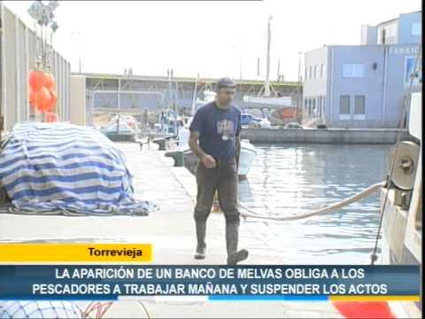 La aparición de un banco de melvas obliga a suspender las fiestas en Torrevieja