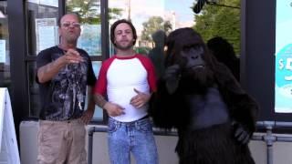 Psh Gorilla Commercial