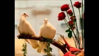 यो जिन्दगीले के गर्यो  के गर्यो  .....By Badal Chamling