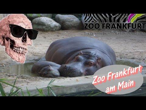 Skullluigii unterwegs: Zoo Frankfurt am Main (FMA)