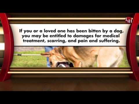 Dog Bite Attorney Plant City FL Animal Attacks