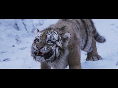 великий тигр - Ruslar.Biz