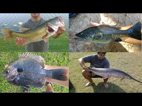 Pictures Of Native Florida Freshwater Fish I Have Caught Part 1