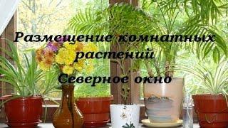 Размещение комнатных растений (Северное окно)
