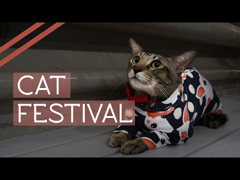Cat Festival 2019 - Only Cats Festival In Singapore