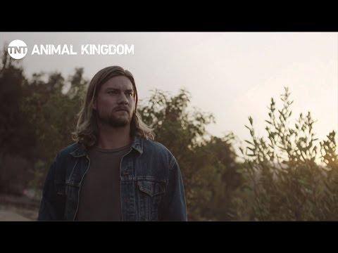 Animal Kingdom: Jake Weary   TNT