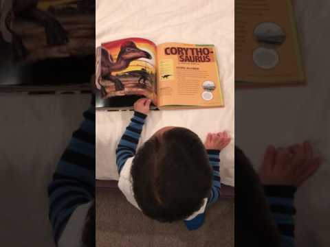 "Two and a half year old toddler is ""reading"" dinosaur encyclopedia"
