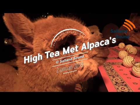 High Tea tussen de Alpaca's in Lemelerveld
