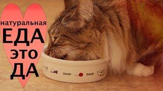 Чем кормить кошек в домашних условиях. Интересный момент.