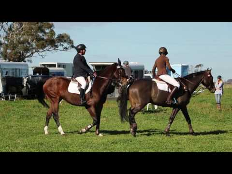 Naracoorte Horse Trials Cross Country Day VLOG