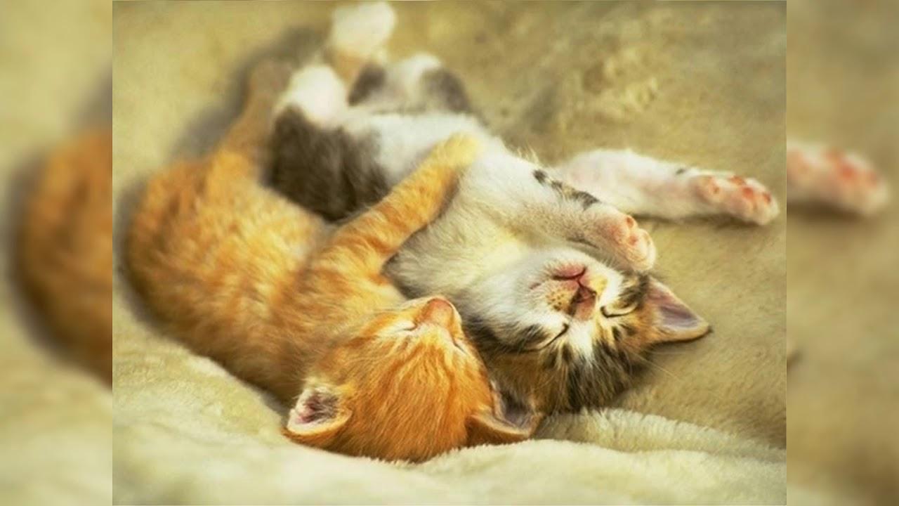Елена, картинка с надписью люблю тебя котенок мой