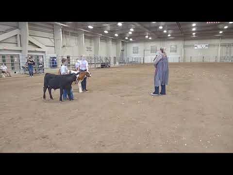 4-H Bucket Calf Show at 2020 Lancaster County Super Fair