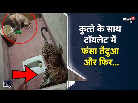 Leopard के साथ टॉयलेट में फंसा कुत्ता, नौ घंटे तक चला रेस्क्यू ऑपरेशन | Viral Video