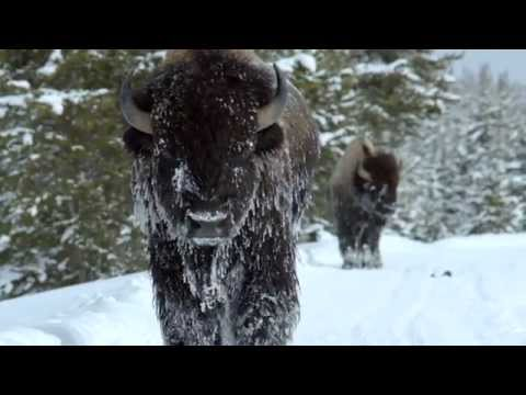 MONTANA It's time. Winter 2015 - Glacier and Yellowstone National Parks