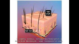 IHC HAIRLOSS Лазерная терапия для лечения волос: Как работает лазерная терапия?(, 2016-02-26T08:08:30.000Z)