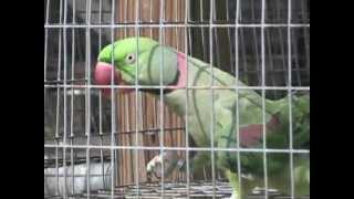 Blue Ribbon Pet Farm - Main Facility Tour and Overview of Exotic Birds
